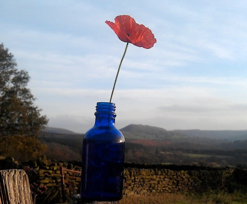 Peace Poppy-Snilesworth-North York Moors