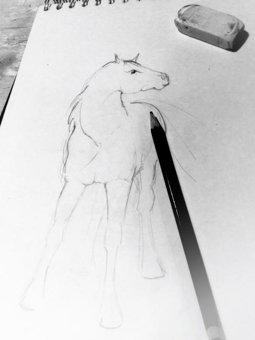 Horse sketch Kim Tillyer