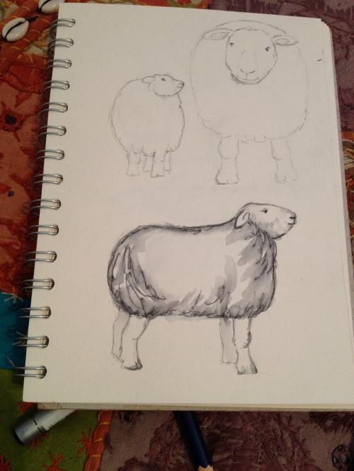 Herdwick sketch