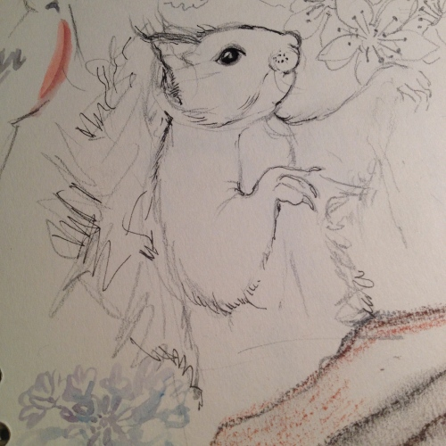 Red Squirrel sketch