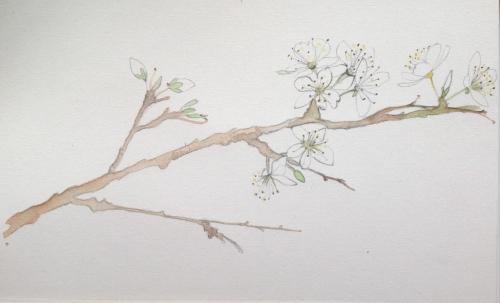 Blossom twig sketch