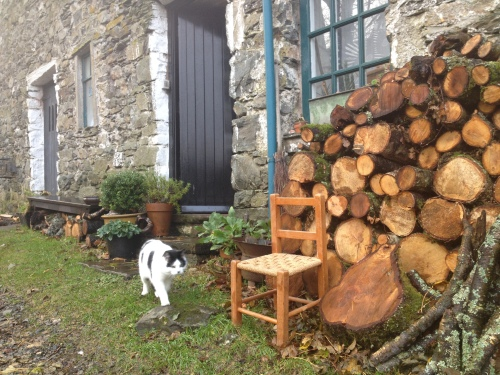 cat and woodpile
