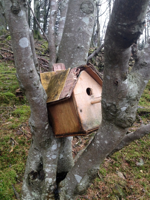 bird house in Buttermere