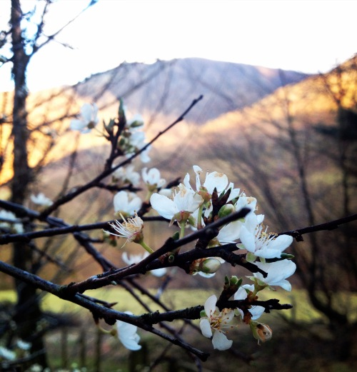 Spring in Newlands Valley
